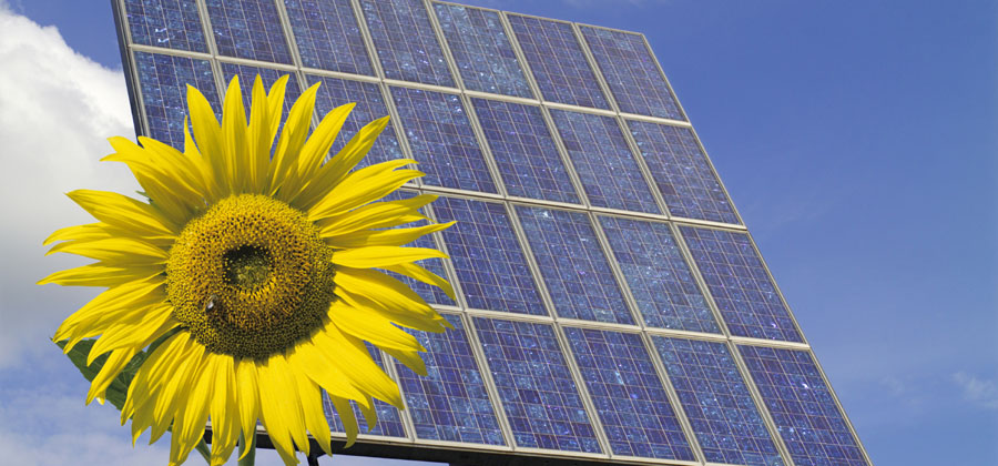 sunflower and solar panel